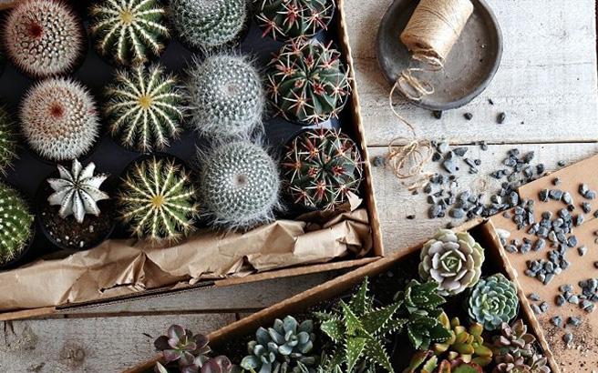 Tekstfoto-mini-cactussen.jpg