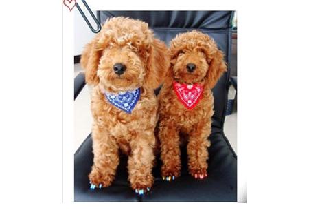 Honden halsband met sjaaltje nu slechts €3,95 | Verkrijgbaar in 5 kleuren in maat S t/m XL
