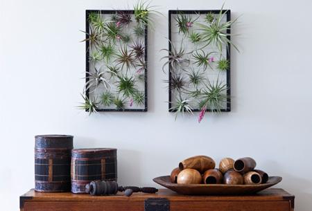 Tillandsia; de plant die leeft van de lucht! Nu 6 stuks al vanaf slechts €14,95