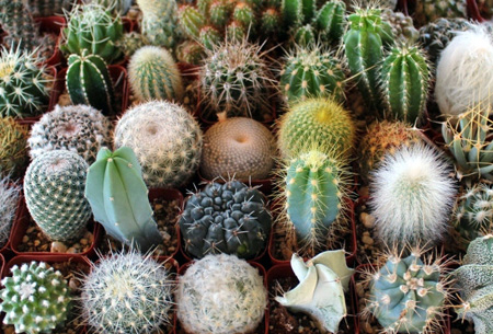 Set van 6, 9 of 12 mini cactussen nu al vanaf €19,90 | Populaire & super trendy cactussen mix