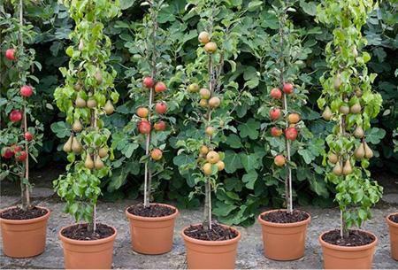 Appels met peren vergelijken? Bestel nu 4 fruitbomen voor slechts €29,95