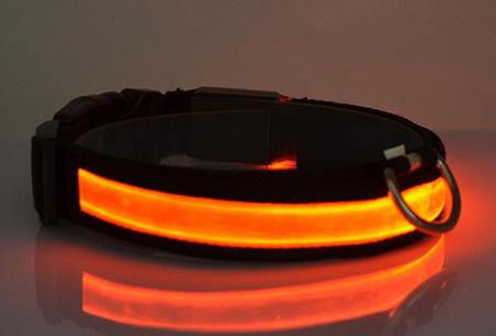 LED hondenhalsband Maat L - Oranje