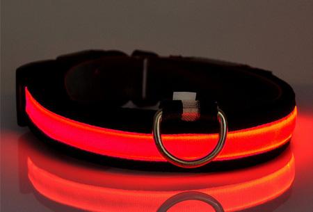 LED hondenhalsband Maat M - Rood