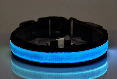 Led hondenhalsband Maat L - Blauw
