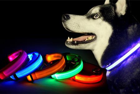 LED verlichte hondenhalsband nu slechts €3,95!