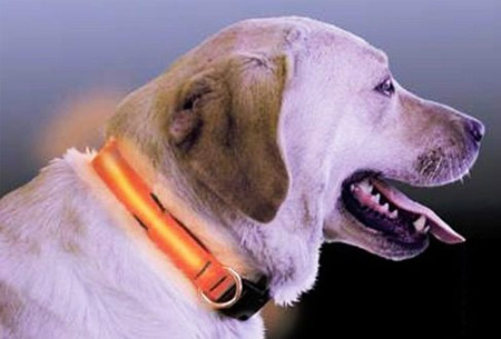 Hondenhalsband Met Licht : Led verlichte hondenhalsband nu slechts