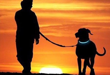 Led hondenhalsband   Lichtgevende halsband voor je hond - extra veiligheid in het donker