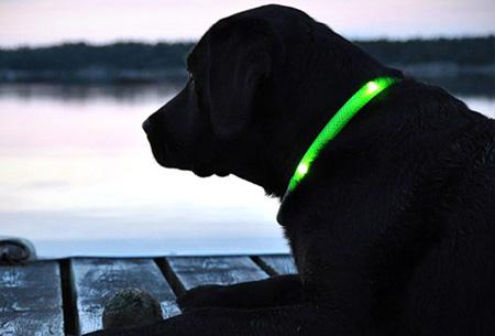 led verlichte hondenhalsband leuke n veilige musthave voor jou en je hond