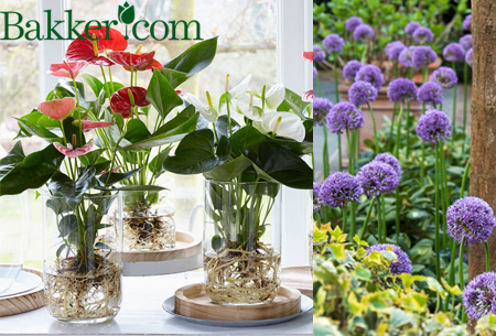 Kortingsvoucher tuincentrum Bakker.com