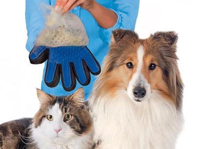Huisdieren borstelhandschoen
