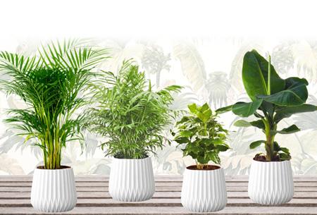 Dagaanbieding: Set van 4 kamerplanten