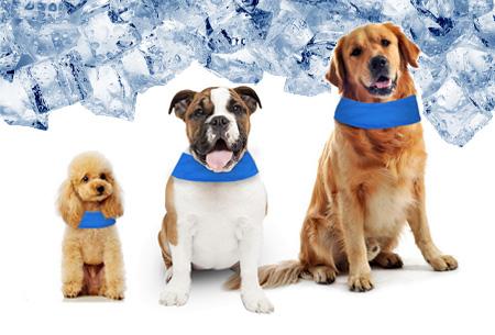 Verkoelende hondenhalsband