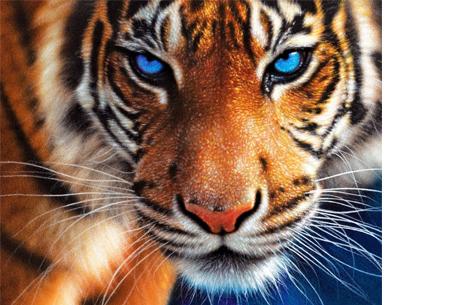 Diamond painting - dieren versie | De nieuwste en ontspannende doe-het-zelf trend! #1 tijger
