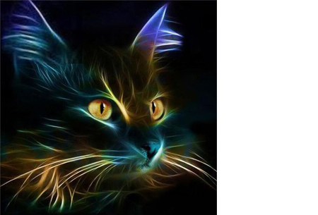 Diamond painting - dieren versie 50 x 50 cm - #4 Kat