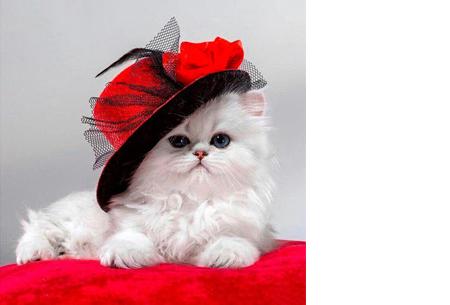 Diamond painting - dieren versie | De nieuwste en ontspannende doe-het-zelf trend! #7 kat met hoed
