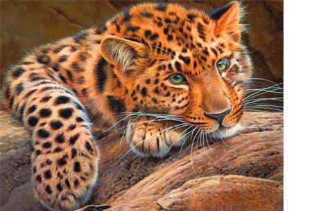 Diamond painting - dieren versie | De nieuwste en ontspannende doe-het-zelf trend! #8 luipaard