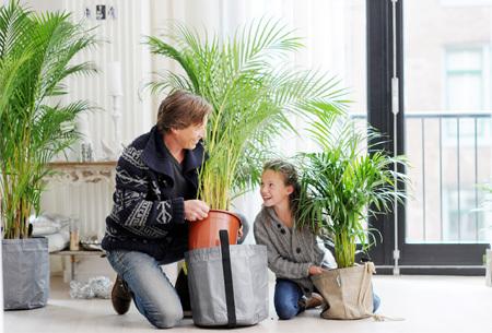 Set van 4 exotische kamerplanten | Mix van trendy planten voor nog geen 5,00 per stuk Areca Lutescens