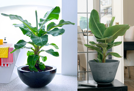 Set van 4 exotische kamerplanten | Mix van trendy planten voor nog geen 5,00 per stuk