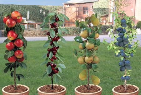 Fruitbomen set van 4 of 8 stuks - nu extra voordelig