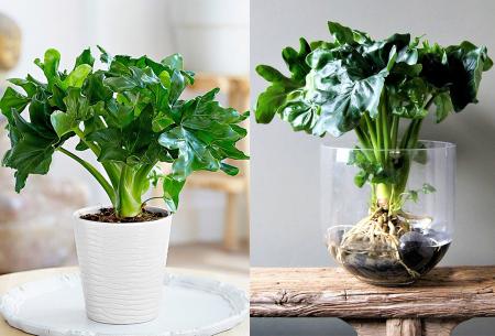 Set van 5 luchtzuiverende kamerplanten | Mix van stijlvolle planten voor nog geen 5,00 per stuk!