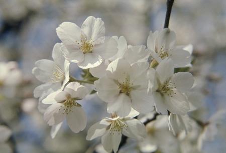 Fruitbomen 5 of 10 stuks | Appel, peer, kers, pruim en perzik
