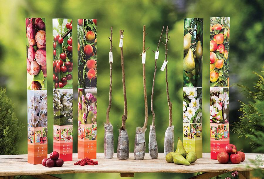 Set van 5 of 10 fruitbomen met korting