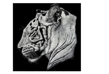 Diamond painting zwart-wit schilderij - in diverse katachtigen | Ontspannen knutselen met deze creatieve bezigheid! #4