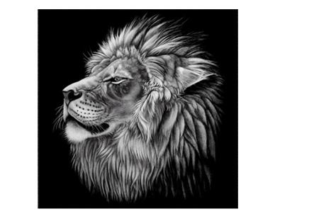 Diamond painting zwart-wit schilderij - in diverse katachtigen | Ontspannen knutselen met deze creatieve bezigheid! #3