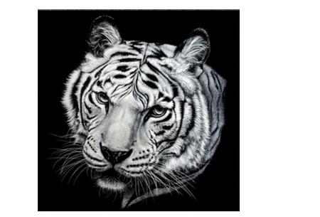 Diamond painting zwart-wit schilderij - in diverse katachtigen | Ontspannen knutselen met deze creatieve bezigheid! #2