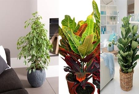 kleine kamer planten ~ lactate for ., Deco ideeën