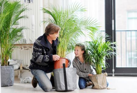 Set van 4 exotische kamerplanten | Mix van trendy binnenplanten voor een tropische sfeer in huis Palm Areca Lutescens