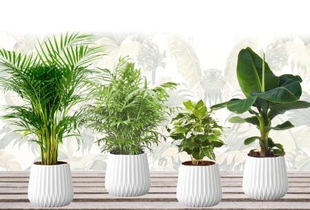 Set van 4 exotische kamerplanten | Mix van trendy binnenplanten voor een tropische sfeer in huis