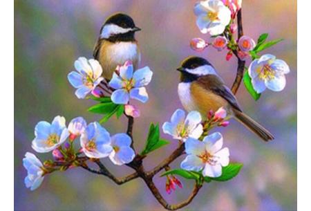 Diamond painting vogels | Creëer zelf prachtige schilderijen met kleurrijke vogelsoorten! #2