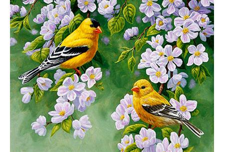 Diamond painting vogels | Creëer zelf prachtige schilderijen met kleurrijke vogelsoorten! #4