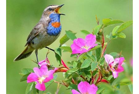 Diamond painting vogels | Creëer zelf prachtige schilderijen met kleurrijke vogelsoorten! #6