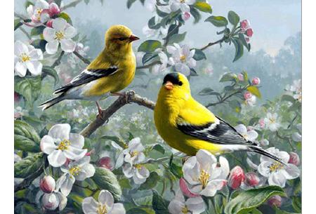 Diamond painting vogels | Creëer zelf prachtige schilderijen met kleurrijke vogelsoorten! #9