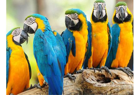 Diamond painting vogels | Creëer zelf prachtige schilderijen met kleurrijke vogelsoorten! #10