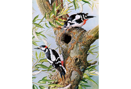 Diamond painting vogels | Creëer zelf prachtige schilderijen met kleurrijke vogelsoorten! #11