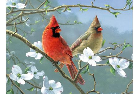 Diamond painting vogels | Creëer zelf prachtige schilderijen met kleurrijke vogelsoorten! #12