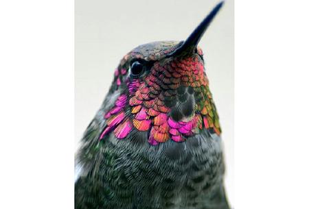 Diamond painting vogels | Creëer zelf prachtige schilderijen met kleurrijke vogelsoorten! #13
