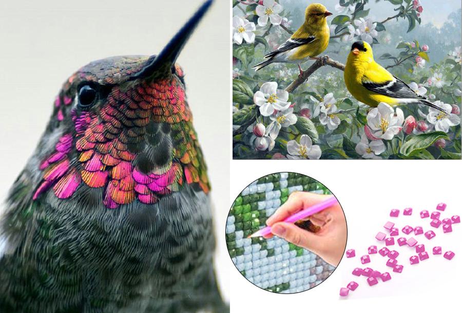 Nu 50% korting: Diamond painting vogels