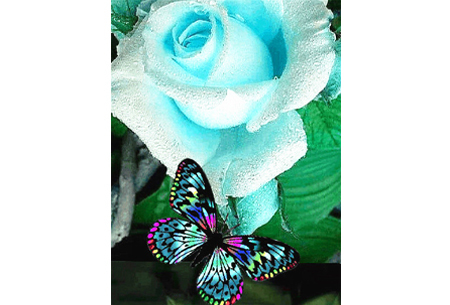 Diamond painting vlinders   Kies uit 14 prachtige schilderijen - in 5 formaten  #1