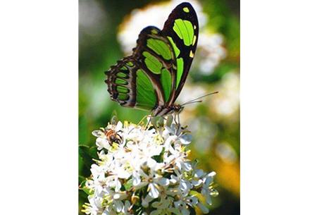 Diamond painting vlinders | Kies uit 14 prachtige schilderijen - in 5 formaten  #2