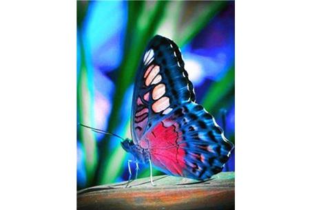 Diamond painting vlinders | Kies uit 14 prachtige schilderijen - in 5 formaten  #5