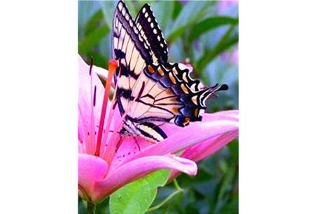 Diamond painting vlinders   Kies uit 14 prachtige schilderijen - in 5 formaten  #7