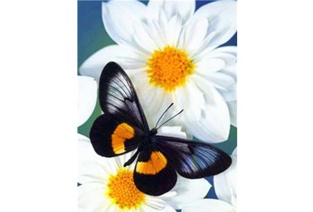 Diamond painting vlinders   Kies uit 14 prachtige schilderijen - in 5 formaten  #8