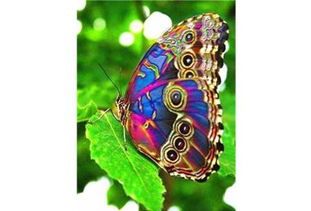 Diamond painting vlinders | Kies uit 14 prachtige schilderijen - in 5 formaten  #9