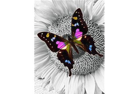 Diamond painting vlinders   Kies uit 14 prachtige schilderijen - in 5 formaten  #12