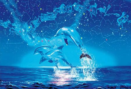 Diamond painting dolfijnen   Adembenemende schilderijen om zelf te maken!  #3
