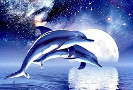 Diamond painting dolfijnen   Adembenemende schilderijen om zelf te maken!  #4